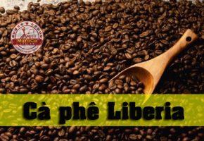 Cà phê Lyberya – Mayaca Coffee