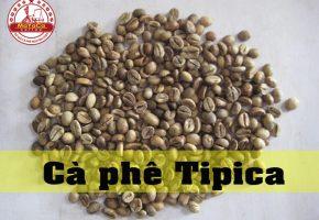 Cà phê Tipica