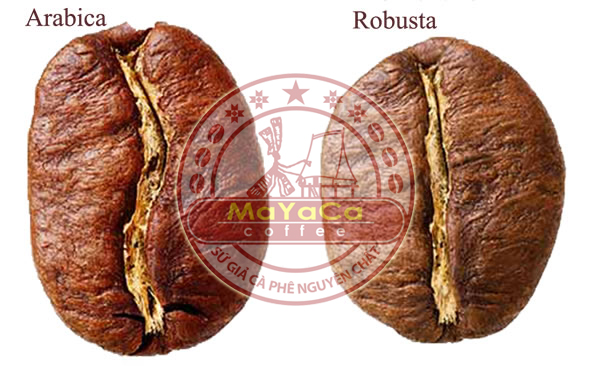 Robusta-and-Arabica-bean