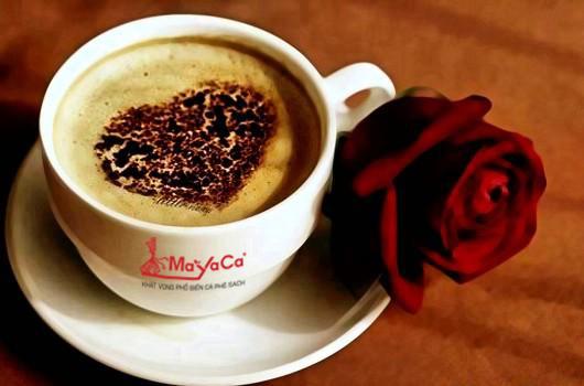 Vì sao cà phê nguyên chất lại có vị chua thanh?