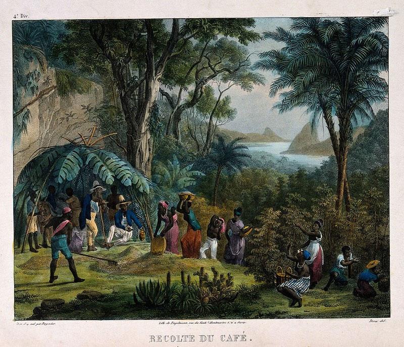no-le-an-do-thu-hoach-vu-mua-tren-mot-don-dien-ca-phe-tranh-khac-mau-nam-1850